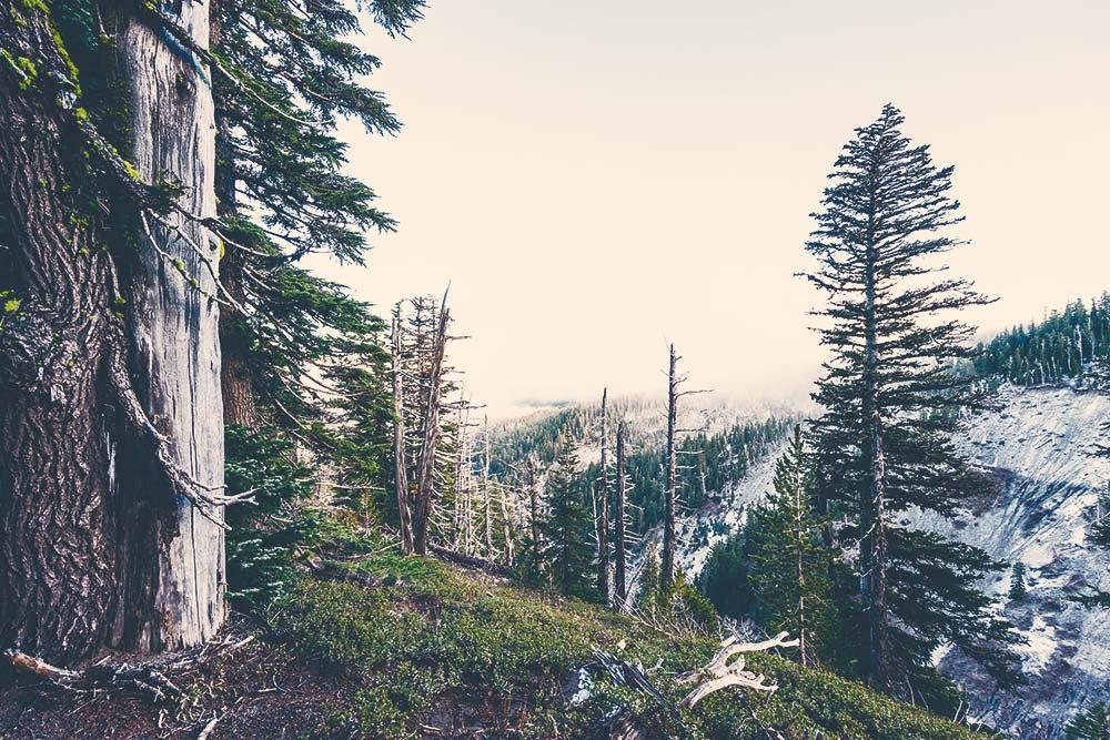 An Amazing Journey Through the Wilderness 4