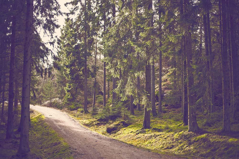 An Amazing Journey Through the Wilderness 5