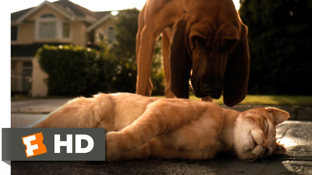 Cats & Dogs 2: The Revenge of Kitty Galore