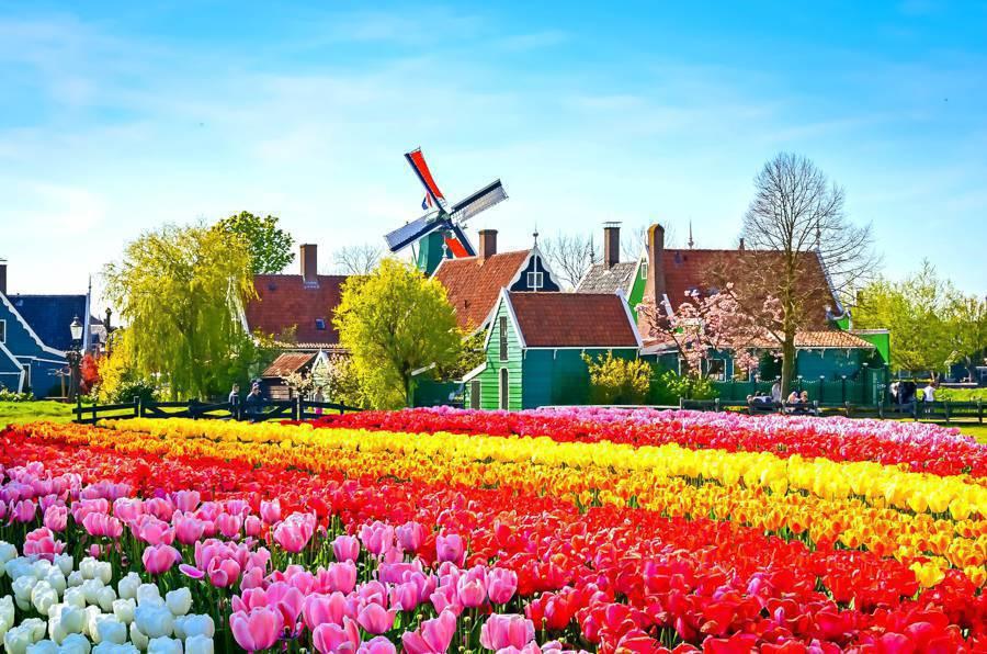 Olanda a partire da €8.500