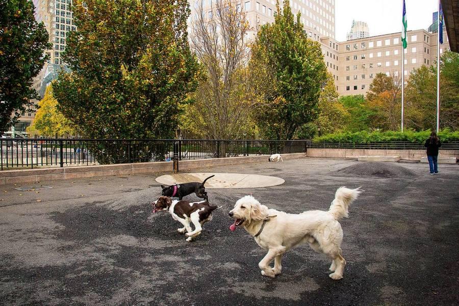 Gateway plaza dog park