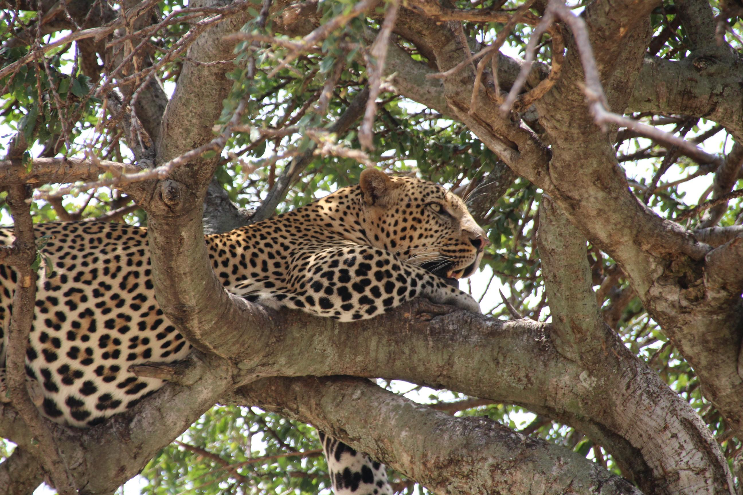 Ultimate African Safari Adventure - You don't want to miss