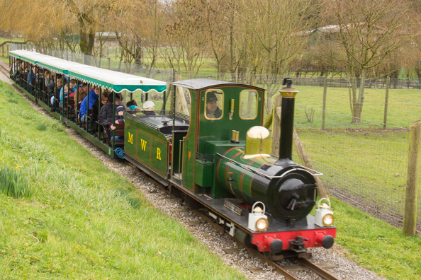 Train at Marwell Zoo - Marwell Zoo