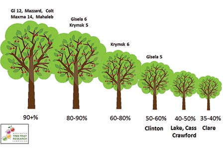 Relative size comparison chart of several rootstocks being evaluated by Michigan State University and Washington State University. More information about this graphic can be found in this Good Fruit Grower article.