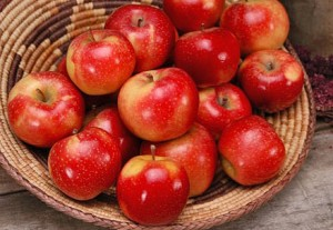 WA 2 was the first WSU apple variety released to Washington growers.