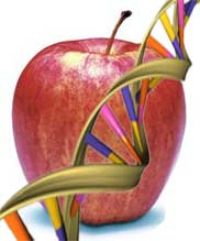 apple-genome