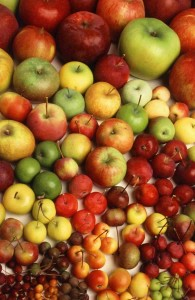 clonal apples