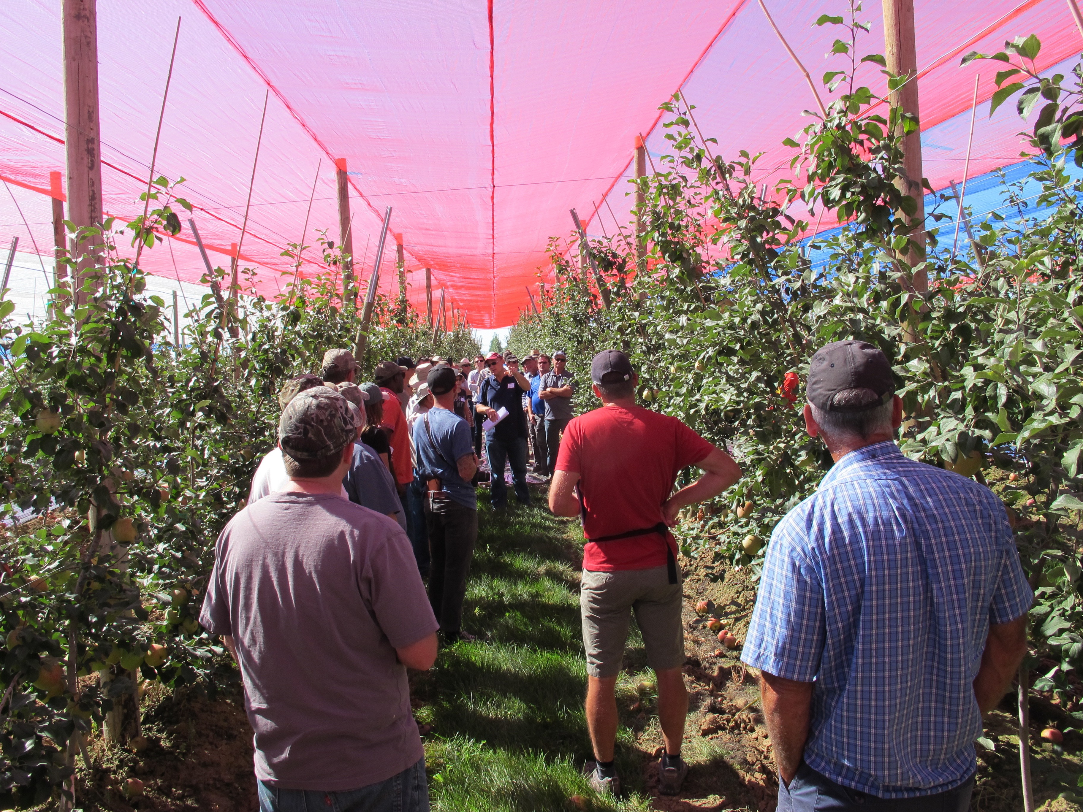 Photoselective Anti Hail Netting | WSU Tree Fruit | Washington State