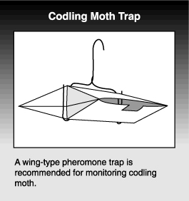 drawing of codling moth trap