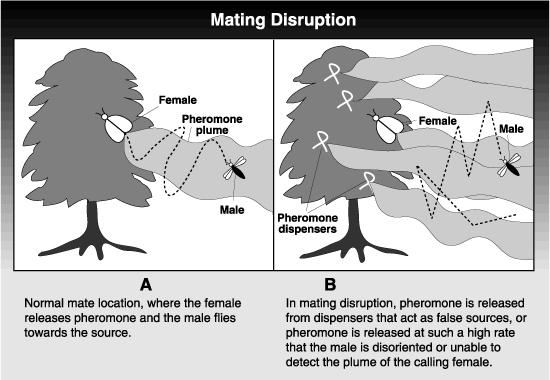 drawing of mating disruption porocess