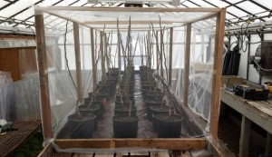 photo of Potted trees in greenhouse.