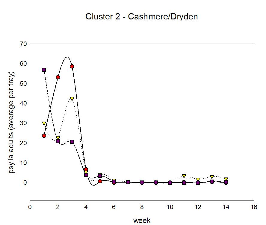 Cluster 2 psylla adults
