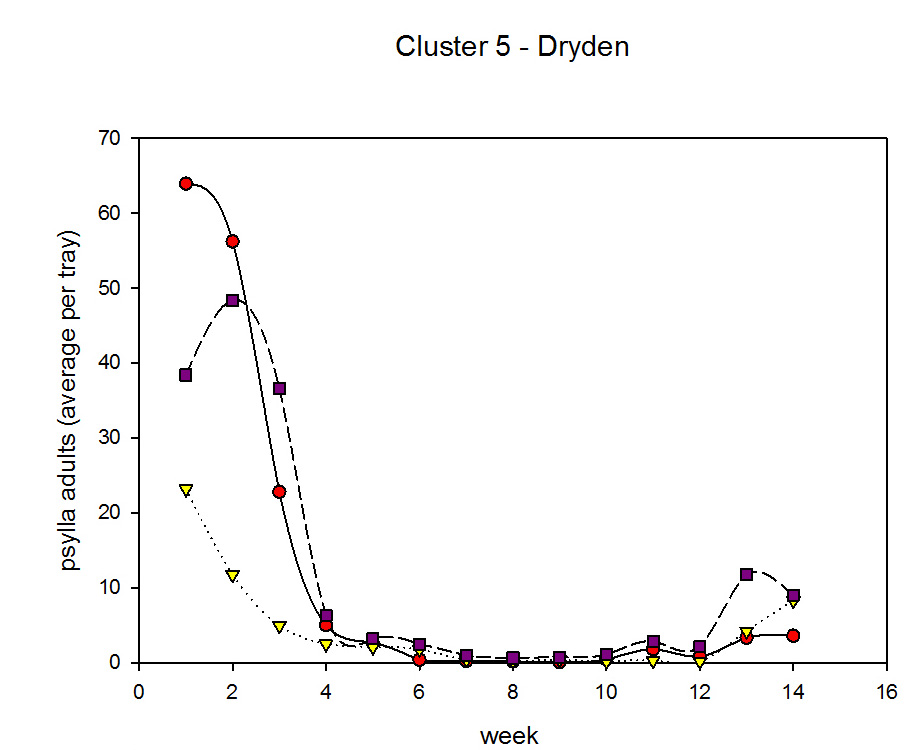 Cluster 5 psylla adults