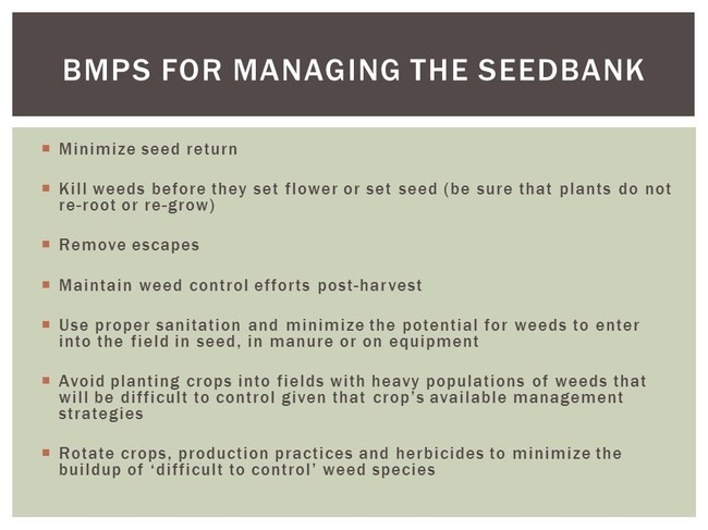 Figure 3. Generalized (across all cropping systems) Best Management Products (BMPs) for minimizing seed return.