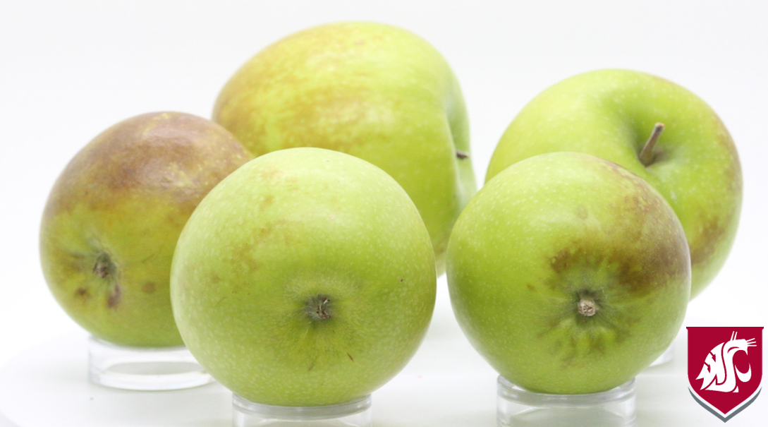 Superficial Scald Granny Smith, photo credit: TJ Mullinix, Good Fruit Grower.