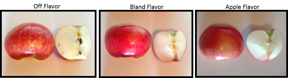 Figure 3: External and internal comparison of Honeycrisp apples with various ratings for taste.