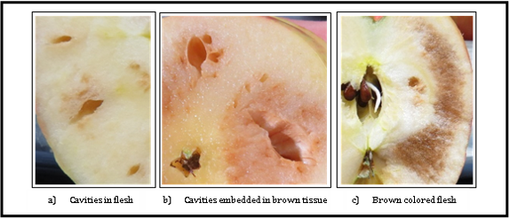 Figure 1: Internal appearance of CO2 injury of Honeycrisp apples grown in Washington state. The most common injury symptoms are cavities (a), cavities embedded in brown tissue (b) or brown colored flesh (c). (Source: Hanrahan et al., 2017)