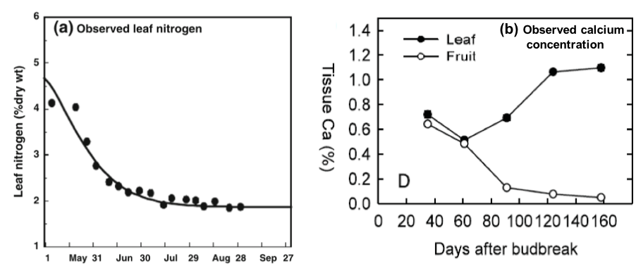 Charts showing the decrease in nitrogen in leaves over the coarse of the season and the difference in leaf and fruit concentrations of calcium.