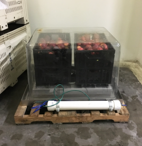 fruit in crates within a SafePod.