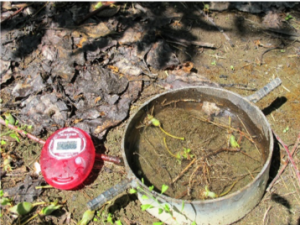 Close-up image of a 12 inch metal ring filled with soil at the base of a tree with a stopwatch lying to the side.