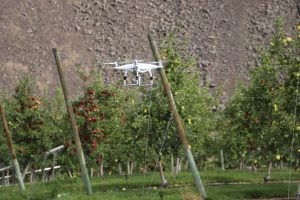 A drone hovering mid-air in an apple orchard.
