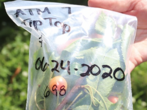 a sample bag with the correct labeling shown.