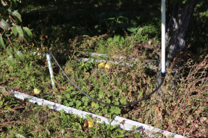 Images show the placement of the under-tree sprinkler with the R200 head.