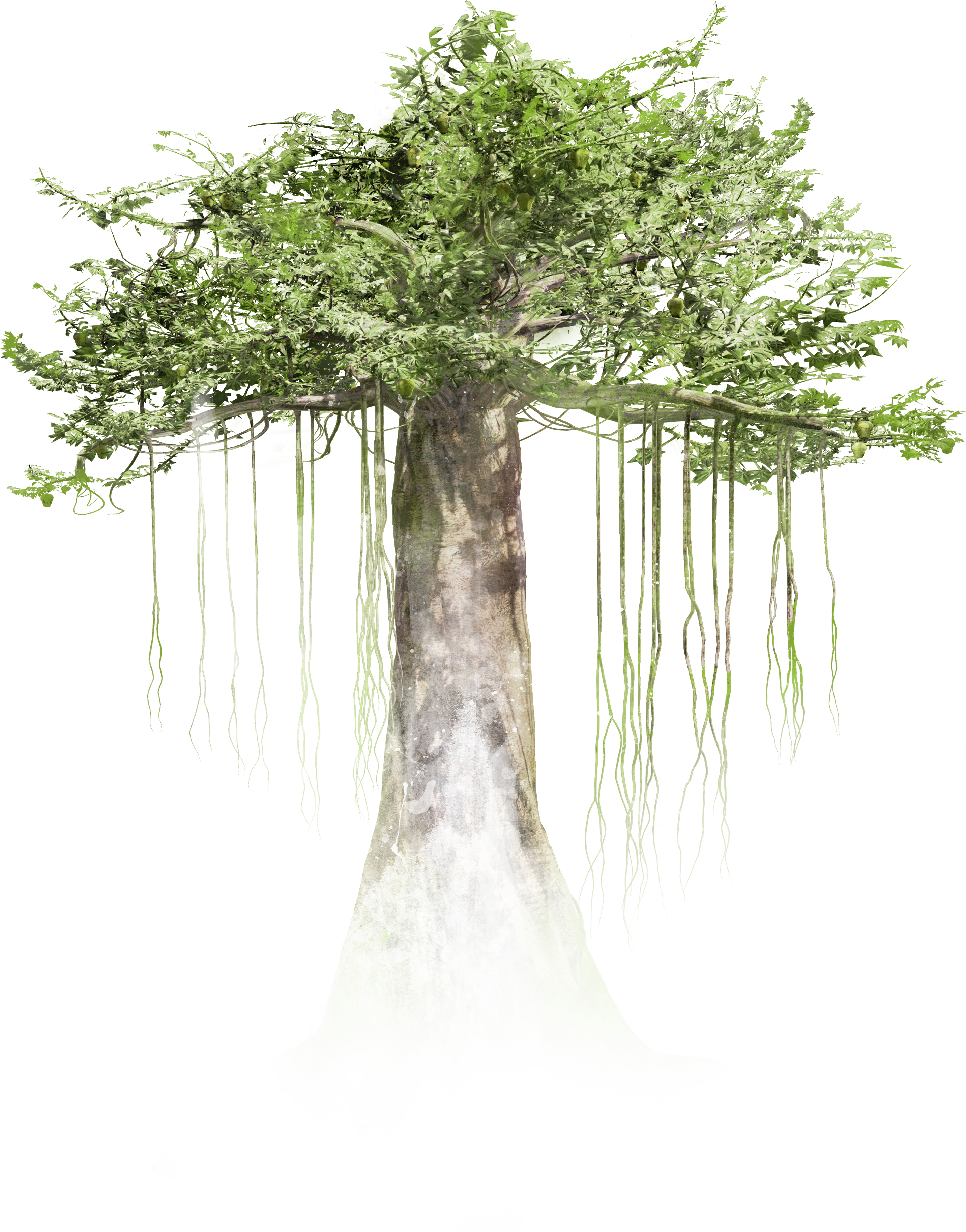 Tree Official for Park Tree Png  104xkb