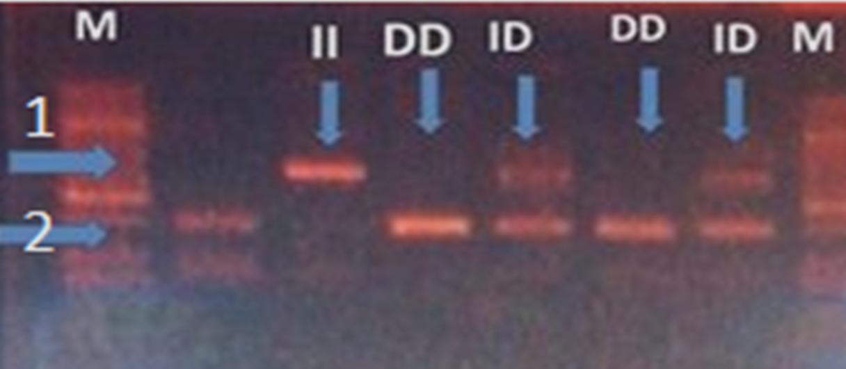 Figure 1  <i>  </i>