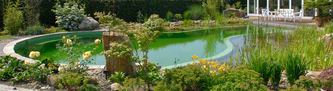 What Are The Pros And Cons Of A Natural Pool