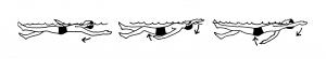 backstroke_psf