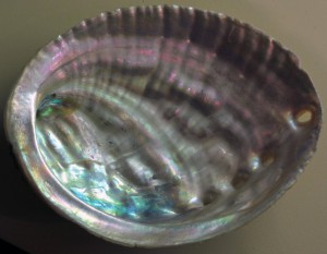 abalone facts - mother of pearl