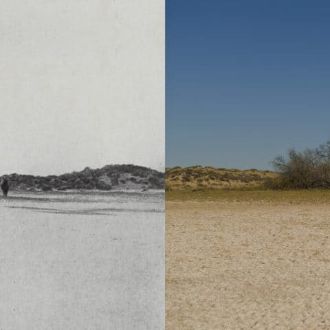 Match Image Left, Carl Lumholtz 1910, Right Ben Johnson, 2016