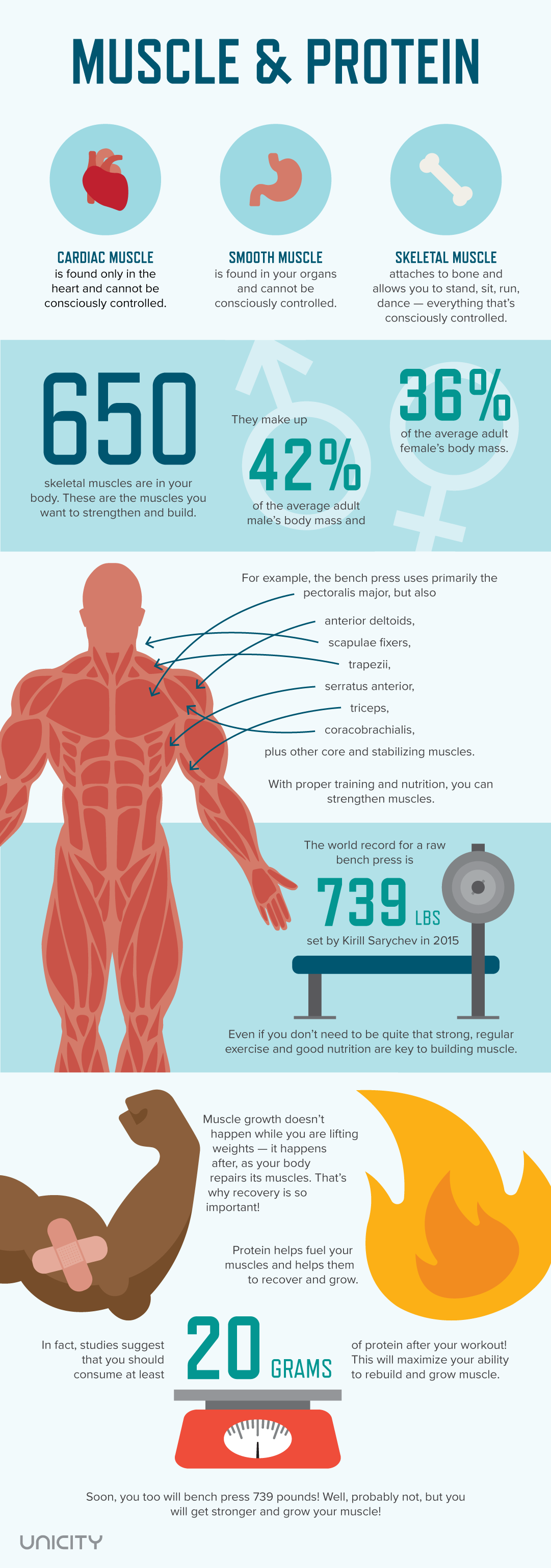 Muscle & Protein Infographic | Unicity Blog