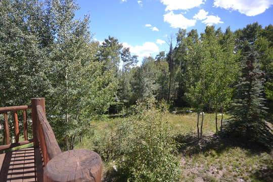 Back yard view, lots of privacy