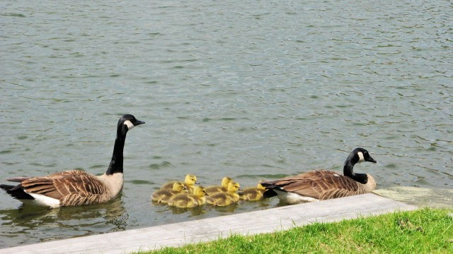 Springtime at the Pond
