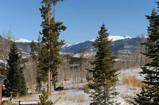 View from back door, hike right into National Forest, great trails right from the house