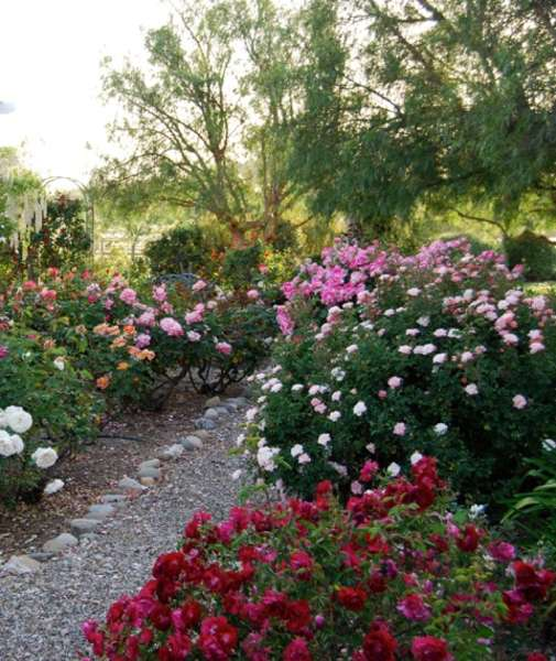 Amazing Rose Gardens