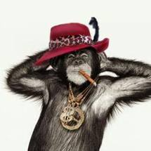 Funky Town Monkey Pimps