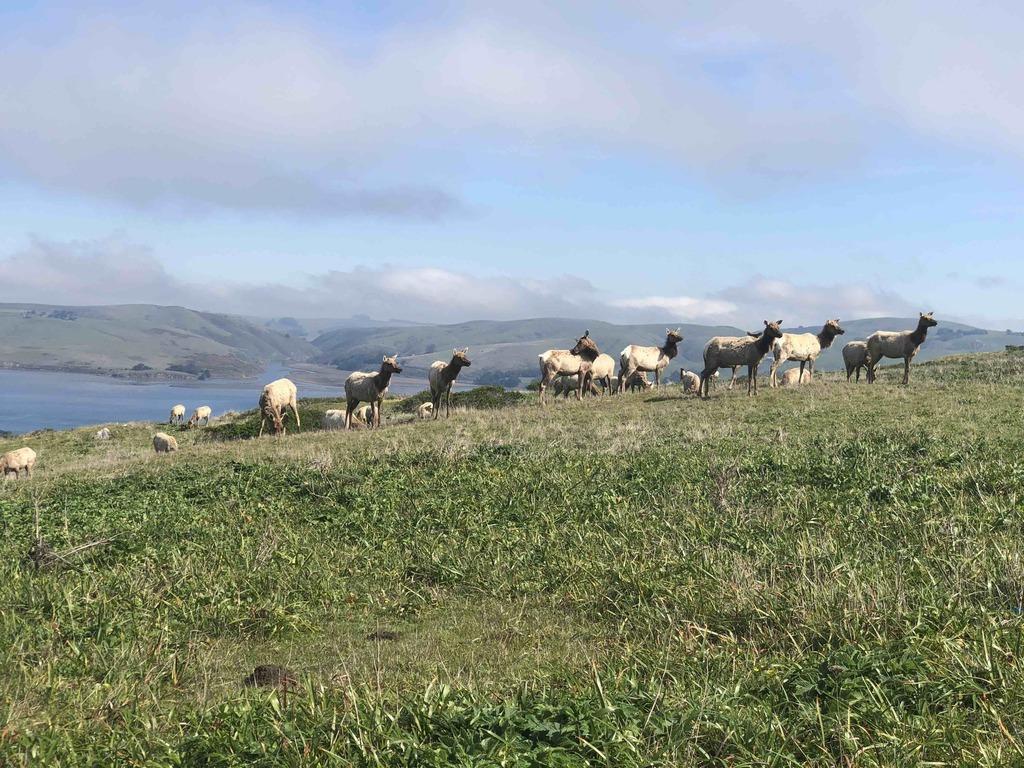Tomales-Point-Trail--Tule-Elk-Preserve