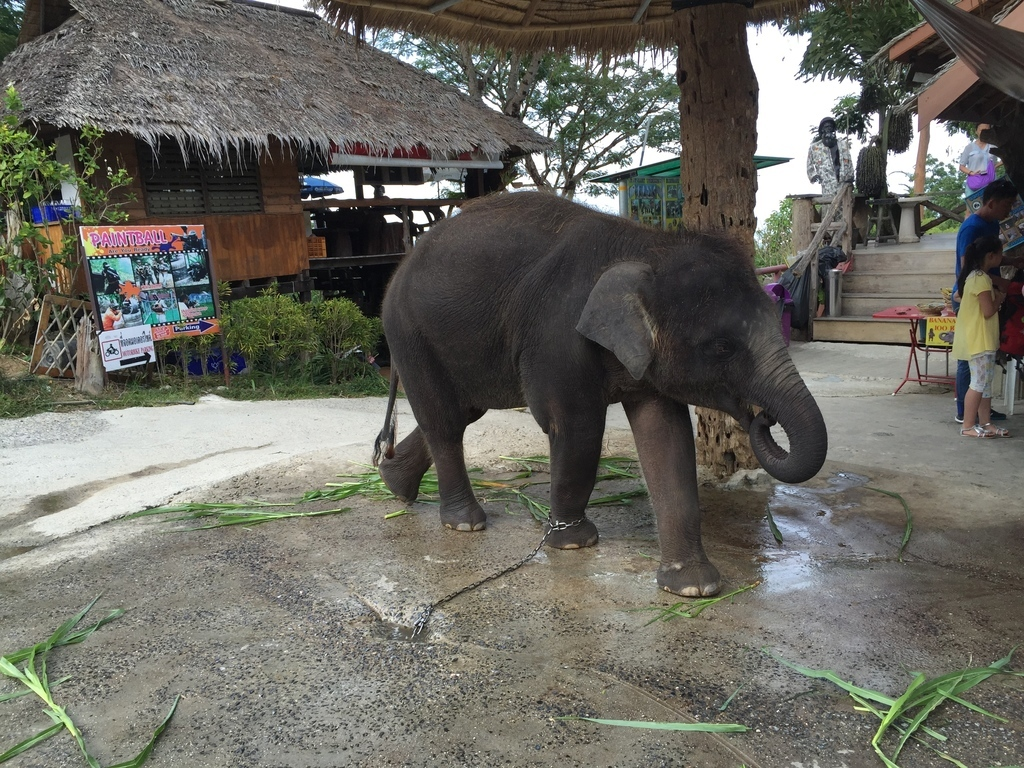 Mueang Phuket District, Phuket, Thailand