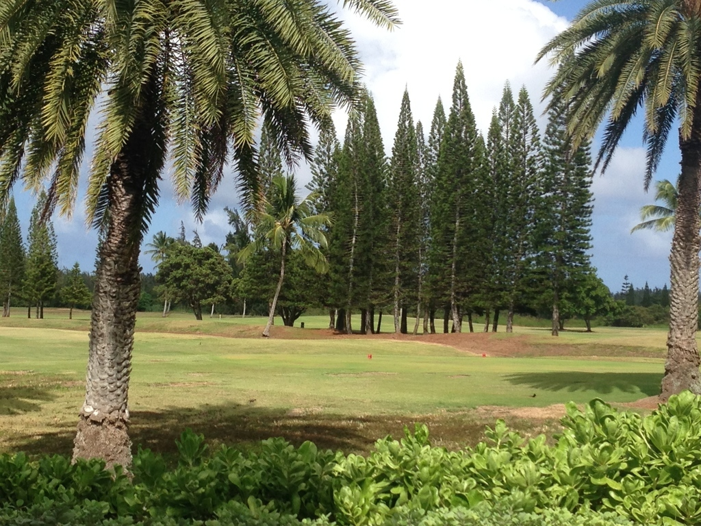 Turtle Bay Golf