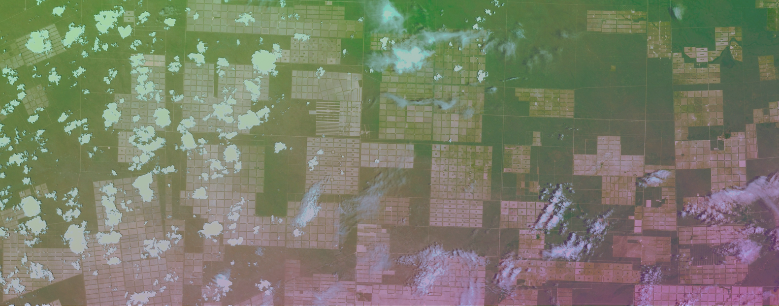 forestsat-header