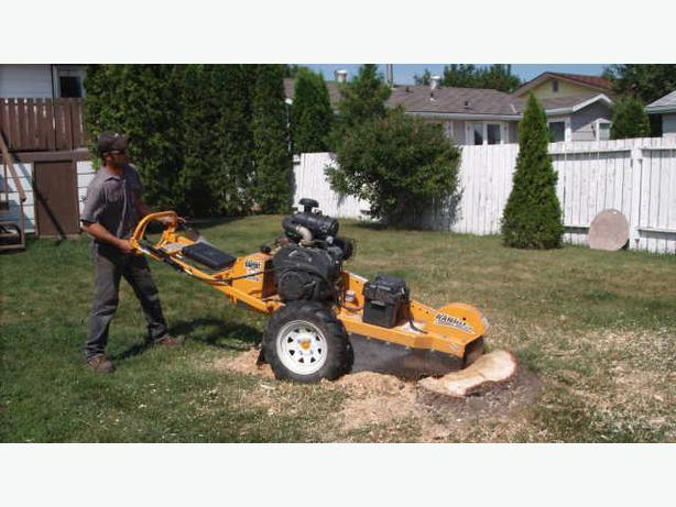 Stump Grinding made affordable