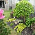 Natural Impressions Landscaping