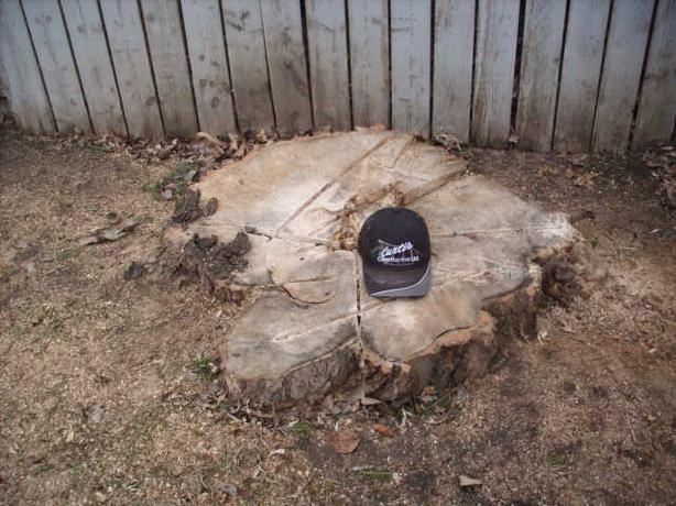 Affordable Tree and Bush Stump grinding-made affordable