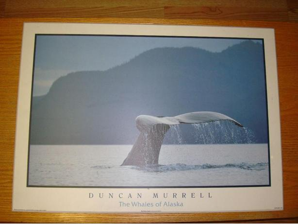 Laminated Duncan Murrell Whale Picture For Sale - Excellent Condition!