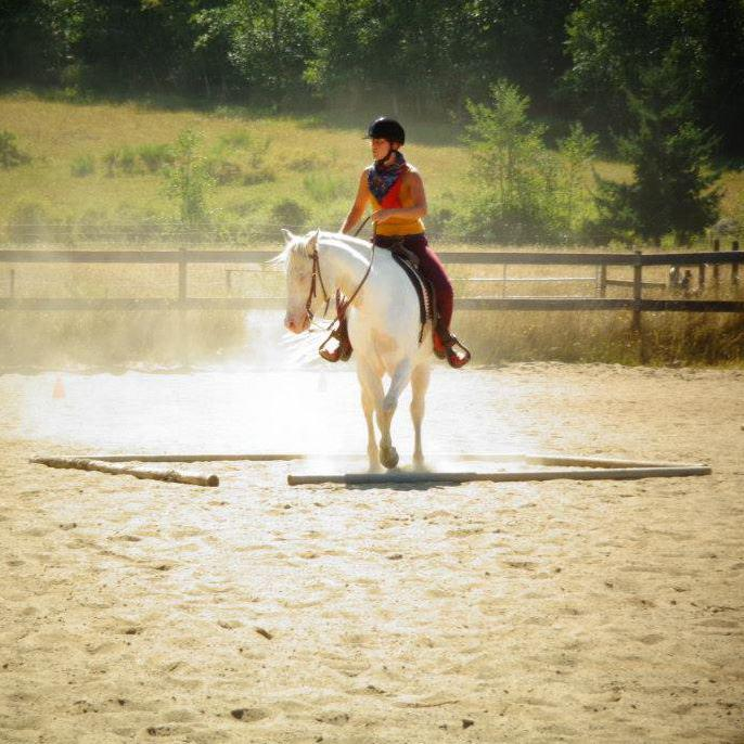 Riding Lessons Trail Rides Horse Leasing Outside Nanaimo Nanaimo