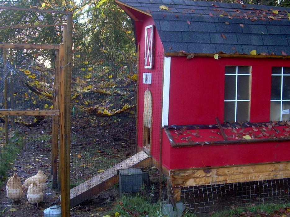 Automatic Chicken Door Opener Outside Nanaimo Nanaimo