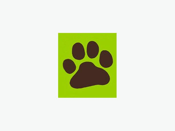 Nature Calls Pet Sitting- Cat & Dog Visits At Your Home